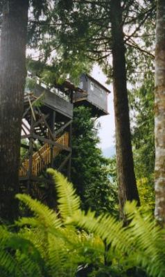 View from stairway and treehouse from rear access